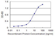 Detection limit for recombinant GST tagged CDC42BPG is 0.3 ng/ml as a capture antibody.