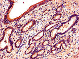 Immunohistochemistry of paraffin-embedded human pancreatic tissue using CSB-PA007733LA01HU at dilution of 1:100