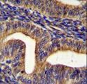 GHSR Antibody immunohistochemistry of formalin-fixed and paraffin-embedded human uterus tissue followed by peroxidase-conjugated secondary antibody and DAB staining.