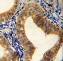 AHCY Antibody immunohistochemistry of formalin-fixed and paraffin-embedded human uterus tissue followed by peroxidase-conjugated secondary antibody and DAB staining.