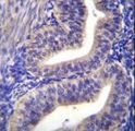 TBPL2 Antibody immunohistochemistry of formalin-fixed and paraffin-embedded human uterus tissue followed by peroxidase-conjugated secondary antibody and DAB staining.