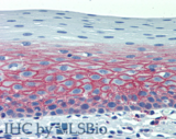 CD82 Antibody - Immunohistochemistry staining of human tonsil (paraffin-embedded sections) with anti-CD82 (C33). Commercially tested by LifeSpan BioSciences.
