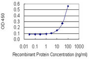 EN2 Antibody - Detection limit for recombinant GST tagged EN2 is 3 ng/ml as a capture antibody.