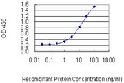 ENTPD3 Antibody - Detection limit for recombinant GST tagged ENTPD3 is 0.3 ng/ml as a capture antibody.