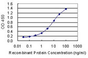 FECH / Ferrochelatase Antibody - Detection limit for recombinant GST tagged FECH is 0.03 ng/ml as a capture antibody.