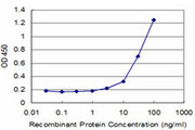 GNG11 Antibody - Detection limit for recombinant GST tagged GNG11 is approximately 3 ng/ml as a capture antibody.