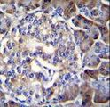 HIP1R Antibody immunohistochemistry of formalin-fixed and paraffin-embedded human pancreas tissue followed by peroxidase-conjugated secondary antibody and DAB staining.