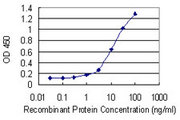 HSF4 Antibody - Detection limit for recombinant GST tagged HSF4 is 0.3 ng/ml as a capture antibody.