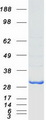 BIN3 Protein - Purified recombinant protein BIN3 was analyzed by SDS-PAGE gel and Coomassie Blue Staining