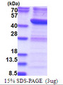 RTCD1 / RPC Protein