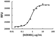 TNFSF4 / OX40L / CD252 Protein - Human OX40L induces proliferation of PHA-activated T cells.