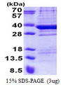 TPGS2 / C18orf10 Protein