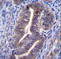 KIAA1324 / maba1 Antibody - K1324 Antibody immunohistochemistry of formalin-fixed and paraffin-embedded human uterus tissue followed by peroxidase-conjugated secondary antibody and DAB staining.