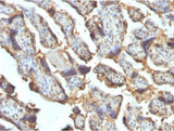 IHC testing of FFPE human placenta with Galectin 13 antibody (clone PP13/1162). Required HIER: boil tissue sections in 10mM Tris with 1mM EDTA, pH 9 or 10mM Citrate buffer, pH 6, for 10-20.
