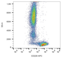 LY9 / CD229 Antibody - Surface staining of human peripheral blood cells with anti-human CD229 (HLy9.25) APC.