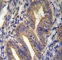METTL10 Antibody immunohistochemistry of formalin-fixed and paraffin-embedded human uterus tissue followed by peroxidase-conjugated secondary antibody and DAB staining.