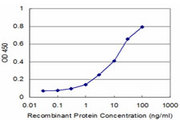 MPHOSPH6 Antibody - Detection limit for recombinant GST tagged MPHOSPH6 is approximately 1 ng/ml as a capture antibody.