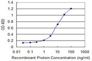 SLC20A2 / PIT2 Antibody - Detection limit for recombinant GST tagged SLC20A2 is 0.3 ng/ml as a capture antibody.