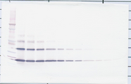 Biotinylated Anti-Human sRANK Ligand (Polyclonal Rabbit) Western Blot Reduced
