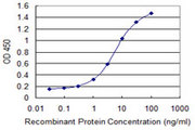 ZNF224 Antibody - Detection limit for recombinant GST tagged ZNF224 is 0.1 ng/ml as a capture antibody.
