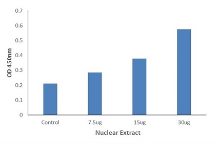 Nuclear Extract - DNA-Binding ELISA Kits