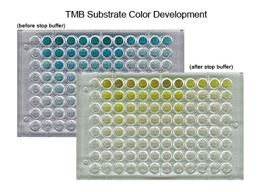 TMB Substrate - DNA-Binding ELISA Kits