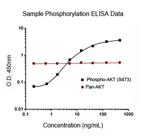 Sample Phosphorylation ELISA Data - Cell-Based ELISA Kits
