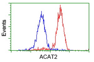 ACAT2 Antibody - Flow cytometry of HeLa cells, using anti-ACAT2 antibody (Red), compared to a nonspecific negative control antibody (Blue).