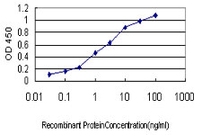 ACE / CD143 Antibody - Detection limit for recombinant GST tagged ACE is approximately 0.03 ng/ml as a capture antibody.