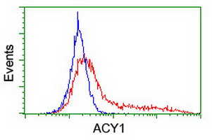 HEK293T cells transfected with either overexpress plasmid (Red) or empty vector control plasmid (Blue) were immunostained by anti-ACY1 antibody, and then analyzed by flow cytometry.