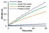 ADA specific activity in rat brain lysate and Jurkat cell lysate.