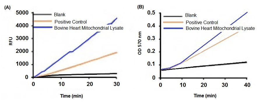 (a) Fluorometric quantitation of Adenylate Kinase Activity in bovine heart mitochondrial lysate (50 ng) and Positive Control (4 µl). (b) Colorimetric quantitation of Adenylate Kinase Activity in bovine heart mitochondrial lysate (500 ng) and Positive Control (5 µl).