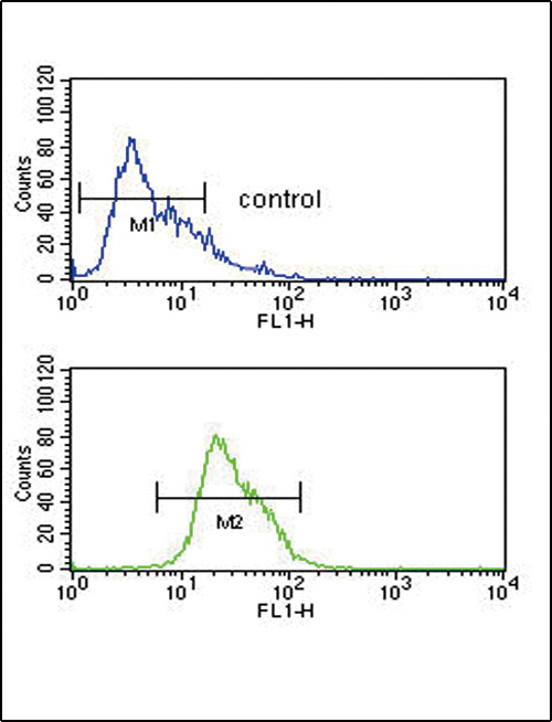 ADH1C Antibody flow cytometry of CEM cells (bottom histogram) compared to a negative control cell (top histogram). FITC-conjugated goat-anti-rabbit secondary antibodies were used for the analysis.