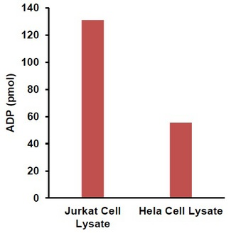 Measurement of ADP in 2 µg HeLa & Jurkat cell lysate respectively.