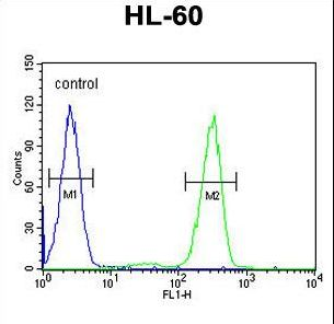 AFTPH Antibody flow cytometry of HL-60 cells (right histogram) compared to a negative control cell (left histogram). FITC-conjugated goat-anti-rabbit secondary antibodies were used for the analysis.