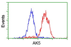 AK5 / Adenylate Kinase 5 Antibody - Flow cytometry of HeLa cells, using anti-AK5 antibody (Red), compared to a nonspecific negative control antibody (Blue).