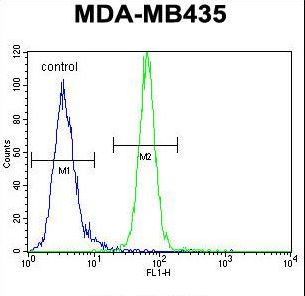 AKT1 Antibody flow cytometry of MDA-MB435 cells (right histogram) compared to a negative control cell (left histogram). FITC-conjugated goat-anti-rabbit secondary antibodies were used for the analysis.