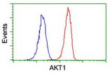 Flow cytometry of Jurkat cells, using anti-AKT1 antibody (Red), compared to a nonspecific negative control antibody (Blue).