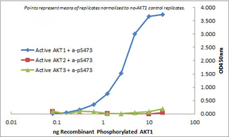 AKT1 Antibody - ELISA of Mouse Monoclonal anti-AKT1 antibody. Antigen: GST AKT1, GST AKT2, GST AKT3. Coating amount: starting from 50 ng/well. Primary antibody: Mouse monoclonal anti-AKT1 unconugated antibody at 100 ng/well. Dilution series: 2-fold. Mid-point concentration: 3 ng/mL Mouse monoclonal anti-AKT1 antibody. Secondary antibody: Peroxidase mouse secondary antibody at 1:10,000. Substrate: TMB
