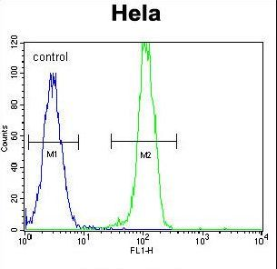 AKT2 Antibody - AKT2 Antibody flow cytometry of HeLa cells (right histogram) compared to a negative control cell (left histogram). FITC-conjugated goat-anti-rabbit secondary antibodies were used for the analysis.