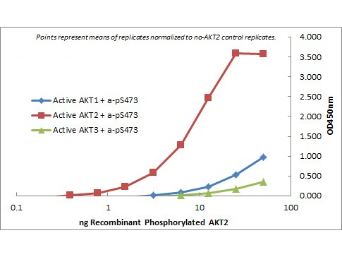 AKT2 Antibody - ELISA of Rat Monoclonal anti-AKT2 antibody. Antigen: GST AKT1, GST AKT2, GST AKT3. Coating amount: starting from 50 ng/well. Primary antibody: Rat monoclonal anti-AKT2 unconjugated antibody at 100 ng/well. Dilution series: 2-fold. Mid-point concentration: 3 ng/mL Rat monoclonal anti-AKT2 antibody. Secondary antibody: Peroxidase rat secondary antibody at 1:10,000. Substrate: TMB