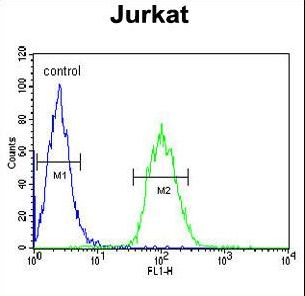 ALAD Antibody - ALAD Antibody flow cytometry of Jurkat cells (right histogram) compared to a negative control cell (left histogram). FITC-conjugated goat-anti-rabbit secondary antibodies were used for the analysis.