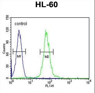 ABCD1 Antibody flow cytometry of HL-60 cells (right histogram) compared to a negative control cell (left histogram). FITC-conjugated goat-anti-rabbit secondary antibodies were used for the analysis.
