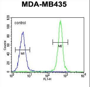 ALKBH6 Antibody - ALKBH6 Antibody flow cytometry of MDA-MB435 cells (right histogram) compared to a negative control cell (left histogram). FITC-conjugated goat-anti-rabbit secondary antibodies were used for the analysis.