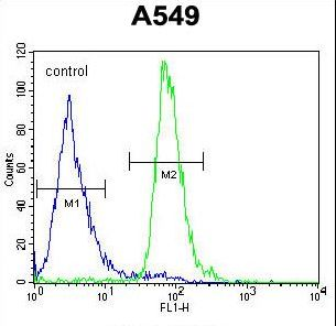ALOX12B Antibody - ALOX12B Antibody flow cytometry of A549 cells (right histogram) compared to a negative control cell (left histogram). FITC-conjugated goat-anti-rabbit secondary antibodies were used for the analysis.