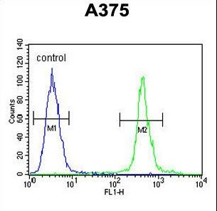 ALS2CR11 Antibody - AL2SA Antibody flow cytometry of A375 cells (right histogram) compared to a negative control cell (left histogram). FITC-conjugated goat-anti-rabbit secondary antibodies were used for the analysis.