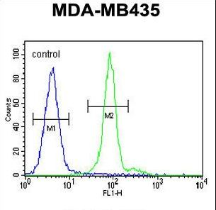 ALX4 Antibody - ALX4 Antibody flow cytometry of MDA-MB435 cells (right histogram) compared to a negative control cell (left histogram). FITC-conjugated goat-anti-rabbit secondary antibodies were used for the analysis.
