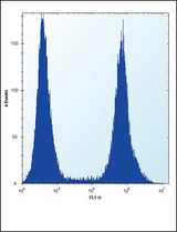 RUNX1 Antibody (S276) flow cytometry of HeLa cells (right histogram) compared to a negative control cell (left histogram). FITC-conjugated donkey-anti-rabbit secondary antibodies were used for the analysis.