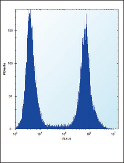 AML1 / RUNX1 Antibody - RUNX1 Antibody (S276) flow cytometry of HeLa cells (right histogram) compared to a negative control cell (left histogram). FITC-conjugated donkey-anti-rabbit secondary antibodies were used for the analysis.