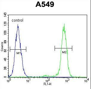 ANAPC5 / APC5 Antibody - ANAPC5 Antibody flow cytometry of A549 cells (right histogram) compared to a negative control cell (left histogram). FITC-conjugated goat-anti-rabbit secondary antibodies were used for the analysis.